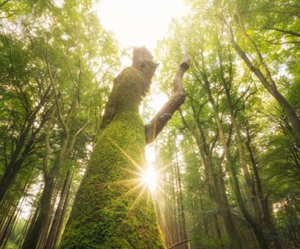 漫漫森林之光 原来树林也可以拍出诗意感