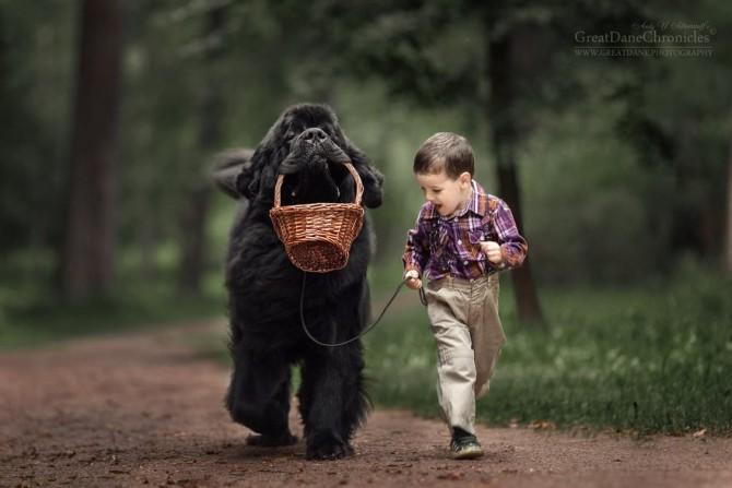 摄影图集:小朋友和他们的巨型犬的友谊