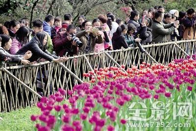 重庆春色美如画,摄影人士开机忙