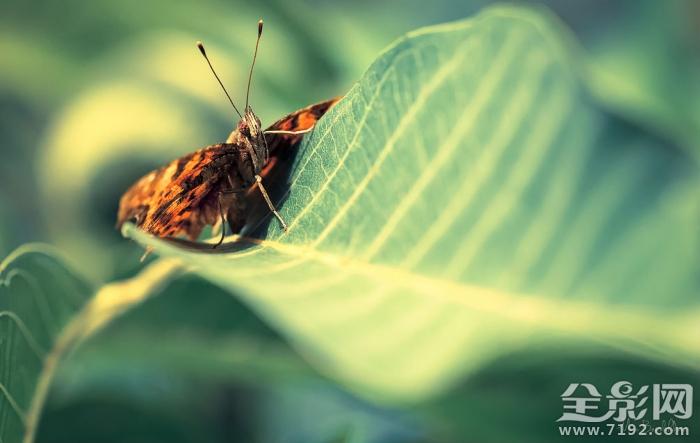 微距镜头下的植物与昆虫