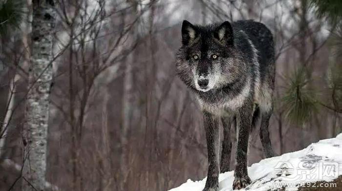 这些野生动物摄影居然是摆拍的