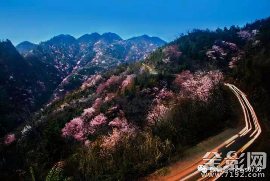 2017(首届) 湖南临湘野樱花油菜花摄影大赛揭晓
