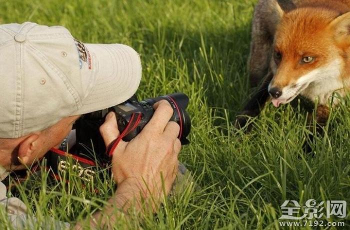 摄影技巧 摄影师与野生动物之间的逗趣时刻 这是一段最有趣的陪伴
