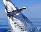 宏伟的赏鲸体验