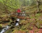 在德国的黑森林远足
