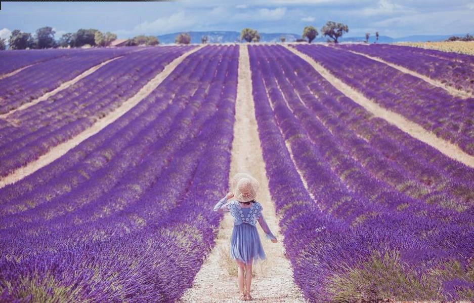 女摄影师游普罗旺斯 薰衣草紫色花海美如画