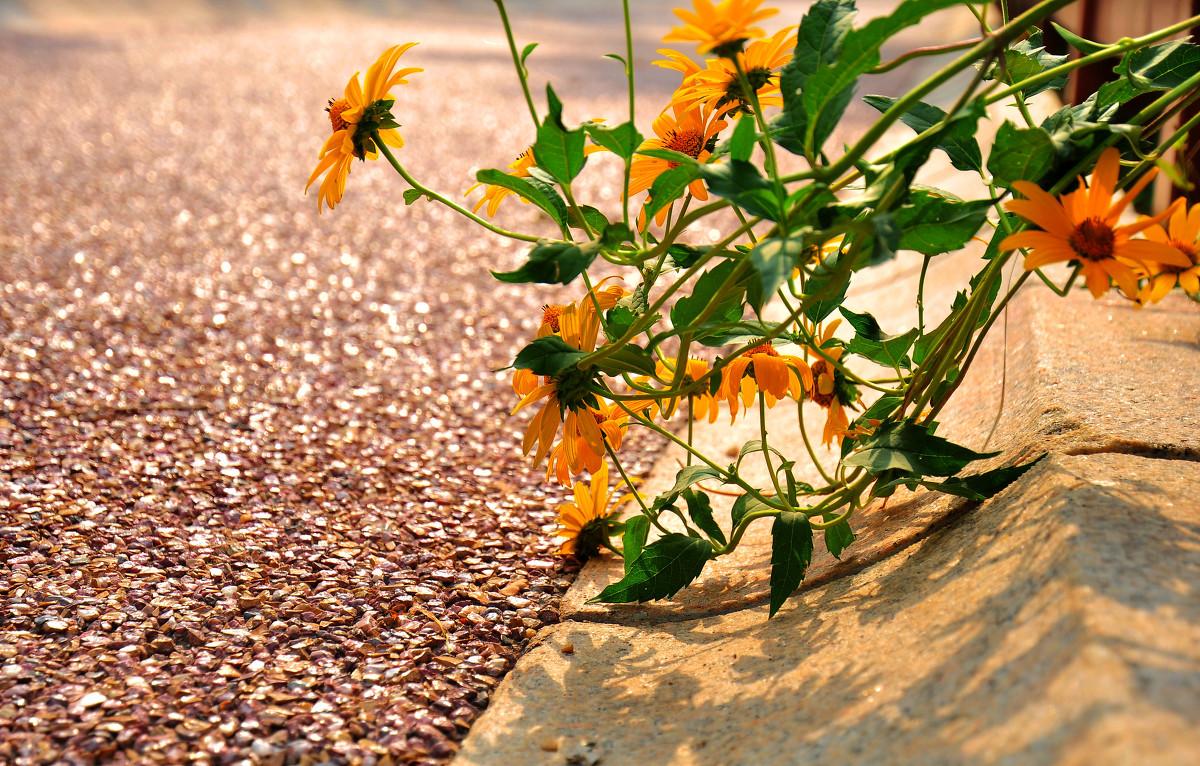 图虫风光摄影:秋初的美