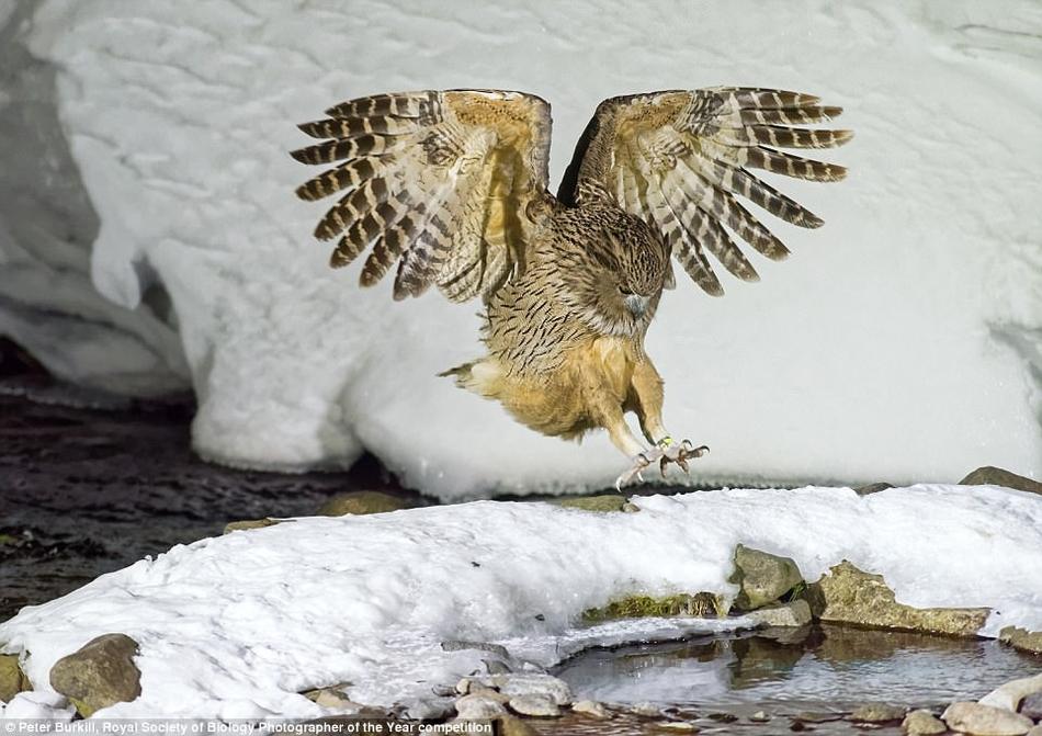 英国最新摄影大赛揭晓自然界隐藏的美丽