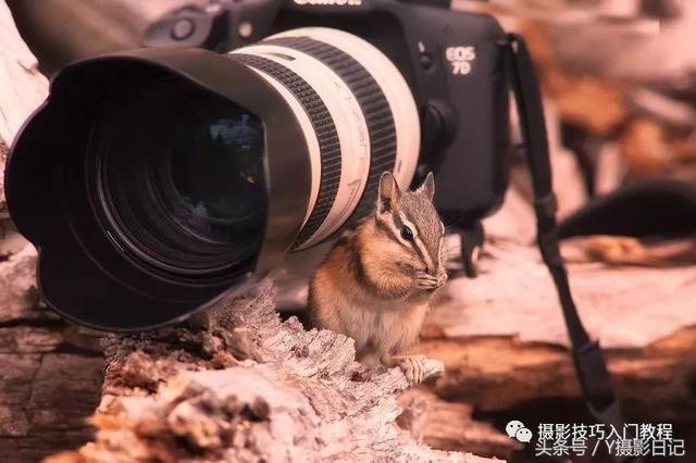 摄影入门:刚入门的摄影新手,如何选择摄影器材?