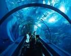 太平洋海底世界博览馆