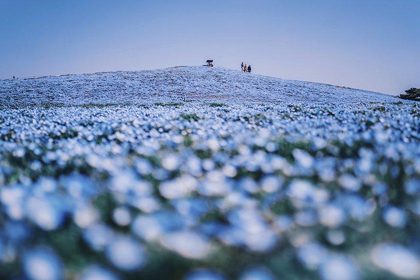 Kristina Makeeva:樱花下的日本古都风光
