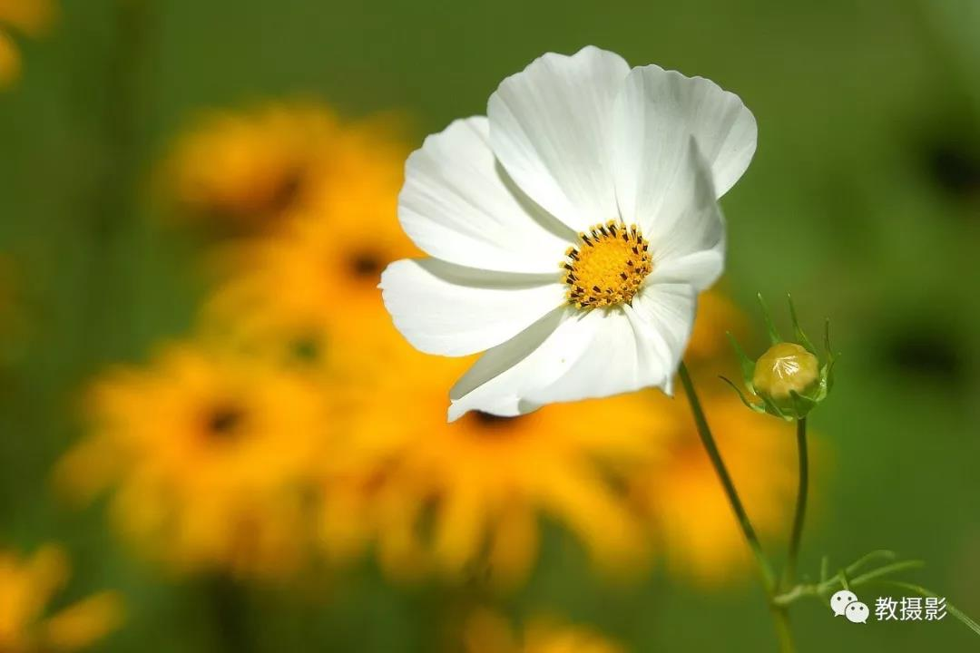 一年都可以拍摄的花,为什么要虚化背景