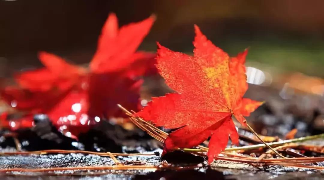 又是一年红叶季,秋季拍照攻略