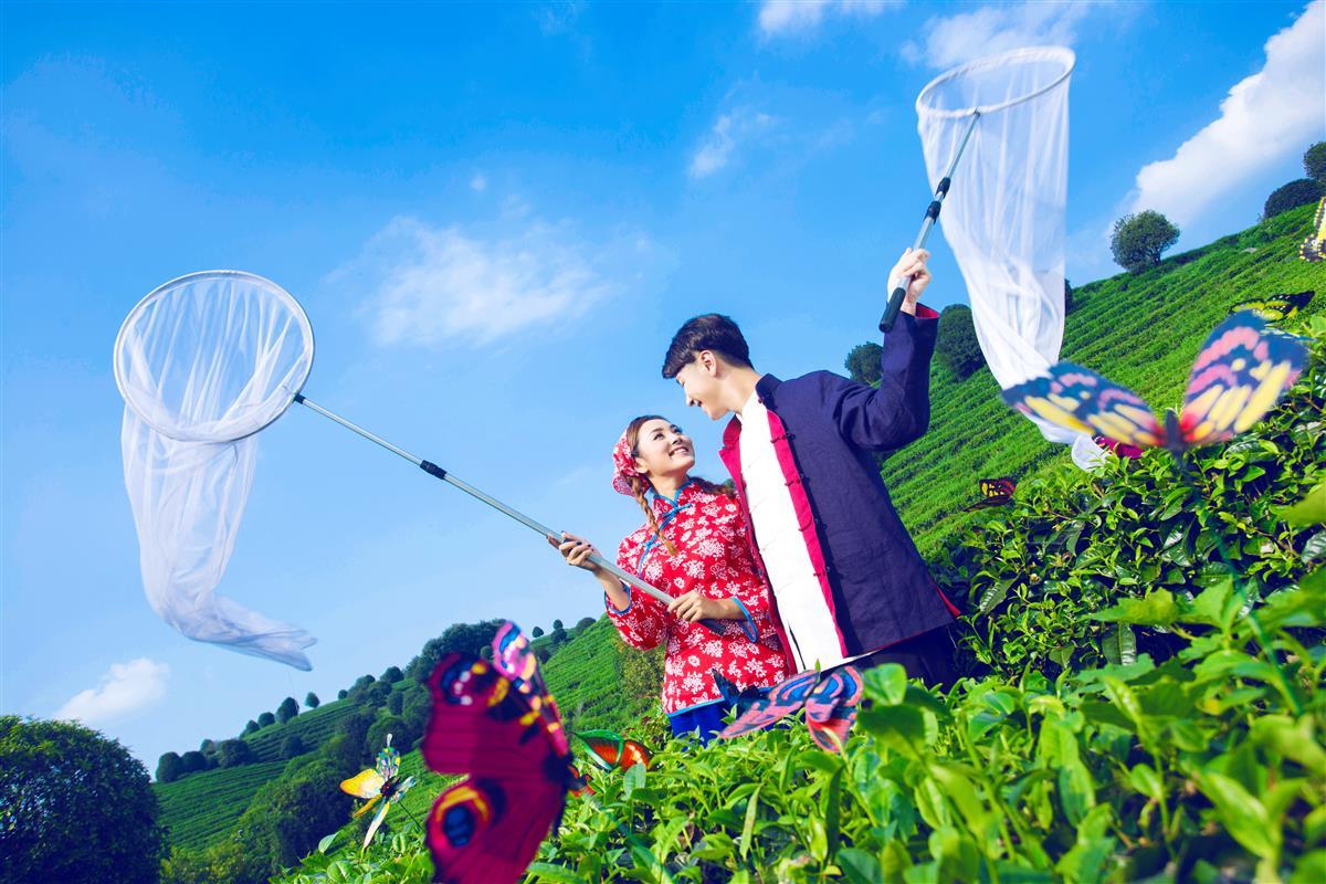 七仙峰茶园